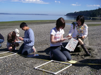 Students working on a beach